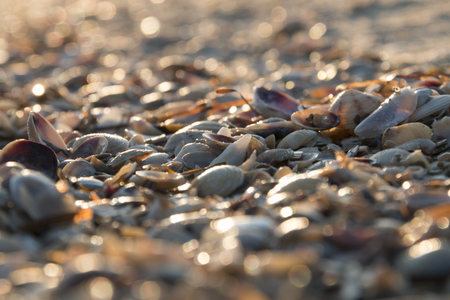 lots of: Seashell background, lots of different seashells piled together