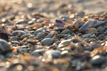 edible snail: Seashell background, lots of different seashells piled together