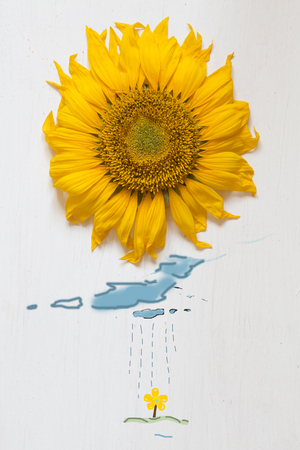 Spring concept, sunflower - sun and rain with clouds Stock Photo