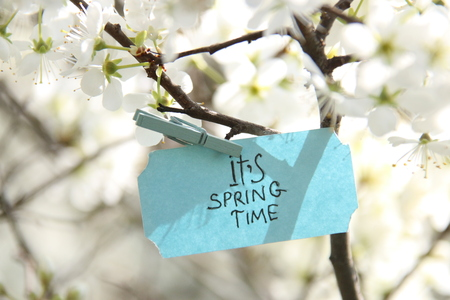 its spring time blue label and white flowers in a spring sunny day Stock Photo