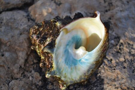 Big shell on the red sea. Banco de Imagens