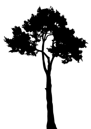 Silhouette of tree on a white bsckground