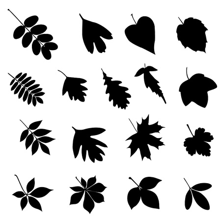 Set of black leaf silhouettes on a white background