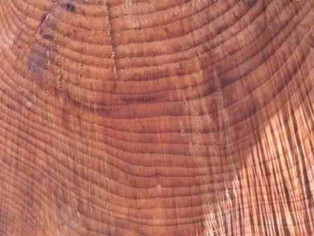 Part of the cross section of a cut tree trunk with annual rings as a close-up view.
