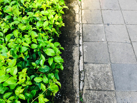 The nature of the city and the footpath