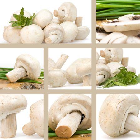 herbage: Fresh mushrooms with herbage collage