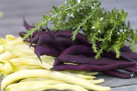 Purple and yellow fresh beans with savory