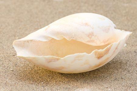Big Sea Shell auf Sand Standard-Bild