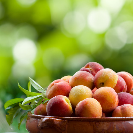 garten: A horizontal view of very juicy peaches in a bowl