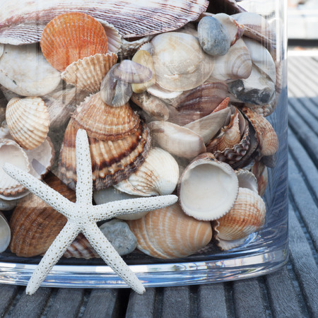 collected: Different shells collected in glass