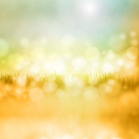 spiegelung: Green grass with reflection isolated on white background