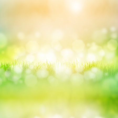 feld: Green grass with reflection isolated on white background