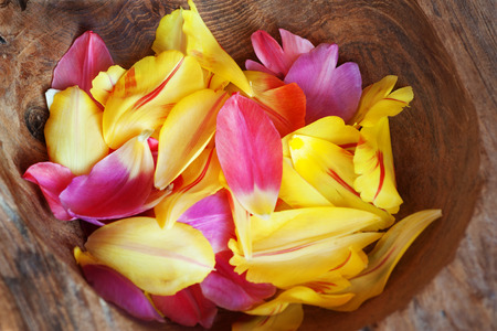 nahaufnahme: Tulips petals in a rustic wooden bowl with focus in the center Stock Photo