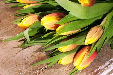 farbe: Tulips on an antique wooden background Stock Photo