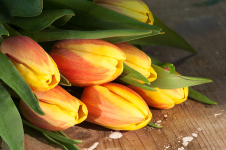 holz: Tulips on an antique wooden background Stock Photo