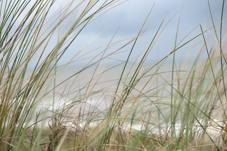 Picture of beach grass, low angle, sea with sky in the background