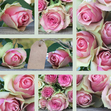 etikett: Collage for Mothers day with pink roses Stock Photo