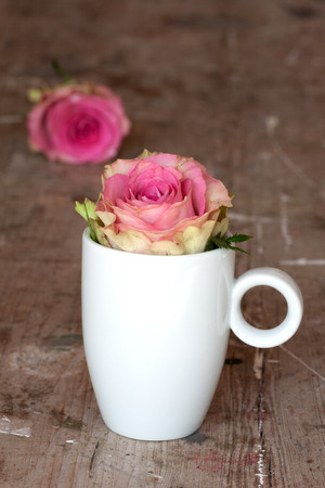 holz: Pink rose in a little white cup for valentines or mothers day