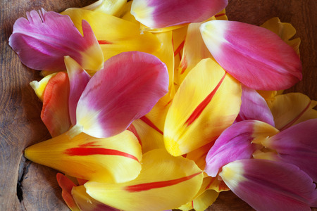 pflanze: Tulips petals in a rustic wooden bowl with focus in the center Stock Photo