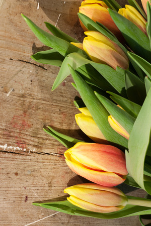 sauber: Tulips on an antique wooden background Stock Photo