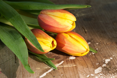 Tulips on an antique wooden background Stock Photo