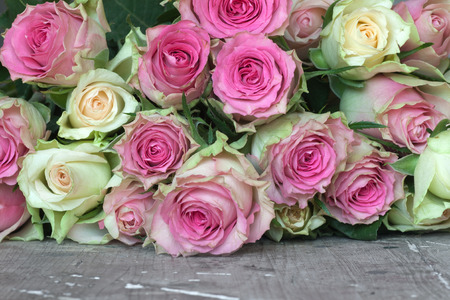 zweig: Pink and yellow roses for valentins or mothers day
