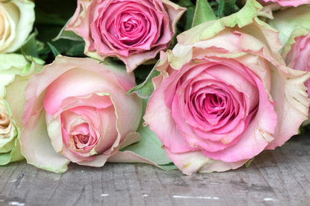 etikett: Pink and yellow roses for valentins or mothers day