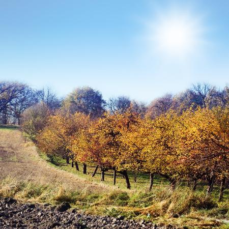 arbre fruitier: Couleur des arbres fruitiers avenue du soleil