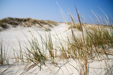North sea dune at the seaside Stock Photo
