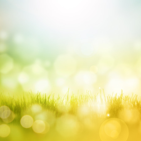 landscape garden: Nice bright and fresh spring background with bokeh effects