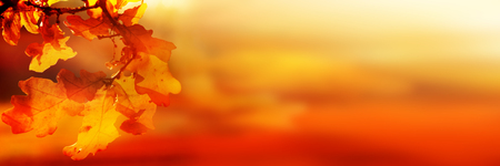 Autumn Leaves Background in orange and gold tones