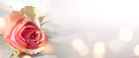 Abstract background with bokeh and a pink rose for a greeting card