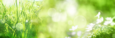 sunshine background: Bright green spring panorama background with bokeh effects grasss and flowers