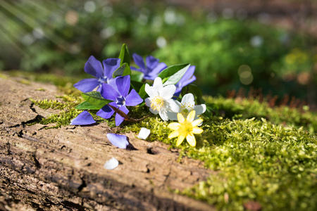 vegatation: Still life with small flowers and sun rays in the forest Stock Photo
