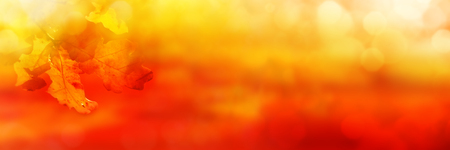 Abstract orange colored autumn background with leaves and bokeh