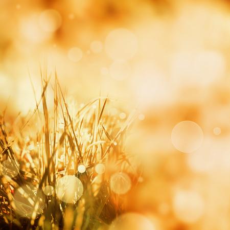 穀物とピンぼけ効果を持つ明るい金色の秋背景