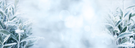 Ice blue winter background with bokeh and rime covered plant leaves 스톡 콘텐츠