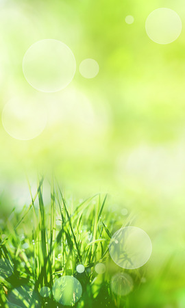 Sunny green spring background with grasses and bright bokeh