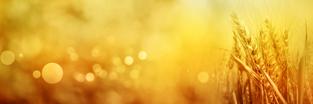 Abstract golden summer scenery with grain stalks and bokeh