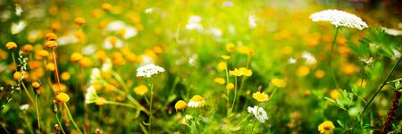 Beautiful blooming flower field in summer for a background