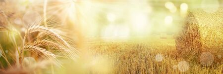 Rural harvest landscape in autumn with sunbeams and bokeh Stok Fotoğraf