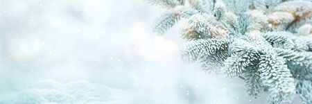 Winter scene background for christmas with fir branches  and bright bokeh
