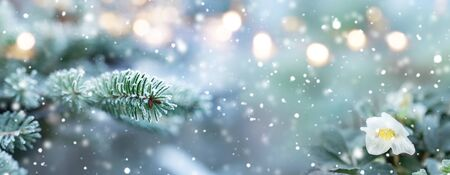 Natural winter scenery with snowflakes and festive golden bokeh for a holiday concept. Background with short depth of field and space for text.