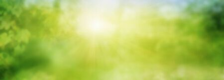 Abstract green sunny spring landscape. Clean nature background for environment and ecology with space for design and text.  Stock Photo