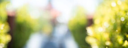 Abstract blurred sunny park landscape with bright bokeh. Horizontal natur background with space for text and design.
