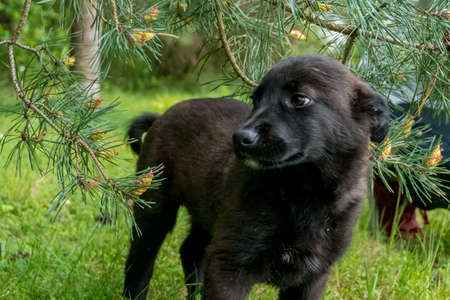 Cute, shy, black puppy enjoy his time in the fresh green garden full of grass and flowers.