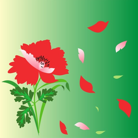 Flowers on a green poppy background, poppy petals floating, floral greeting card Stock Vector - 12902158