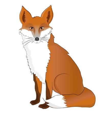 Vector illustration of a Fox Foto de archivo - 106215059