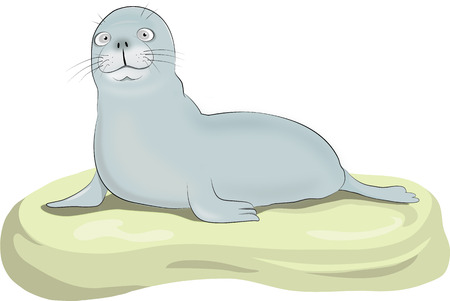 Vector illustration of a seal on a rock Çizim