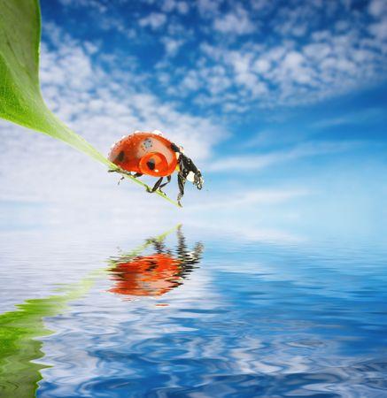 Ladybug on green leaf over blue sky background Stock fotó